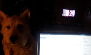 A Dog and his Work