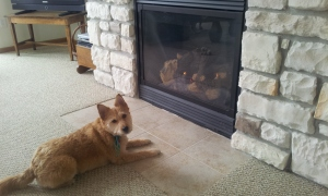 Warming My Paws