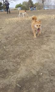 Playtime with Eddie