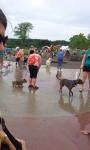 Doggie Playground