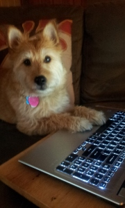 When Dogs Blog