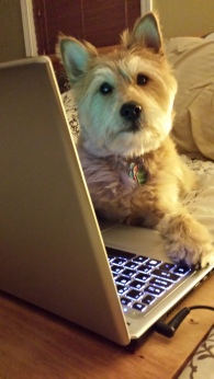 Dog Blog with a Cause