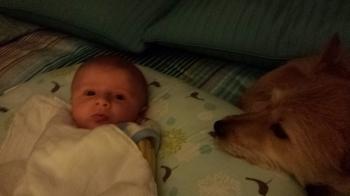 Boppy buddies